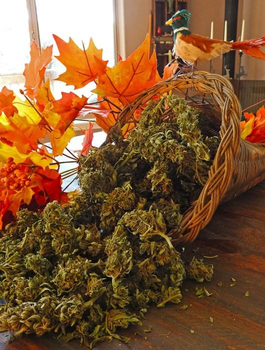 cornucopia of weed