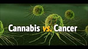 UW professor discovers new cannabinoid compound that slows cancer cell growth