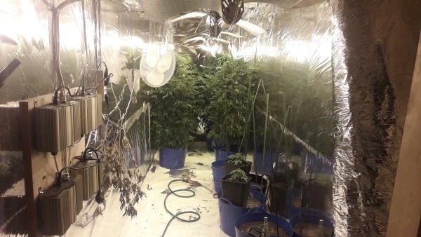 Man Arrested After Discovery of Grow House In Waterford , Ireland
