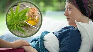 Canada Plans Major Cancer Cannabis Study