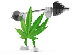 Weed Helps Me Workout Say 80% Of Users