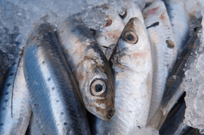 Spanish Police Throw 24 Tons of Moroccan Sardines After False Cannabis Alert