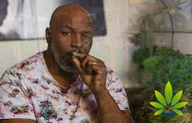 Everybody is loving the Mike Tyson Weed Spend Story