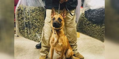 USA: Drug detection dogs discover 40 lbs. of weed at Jackson postal facility