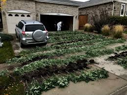 DEA: Black market marijuana growers sent to federal prison