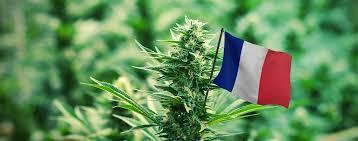 Cannabis street prices surge under coronavirus lockdown in France