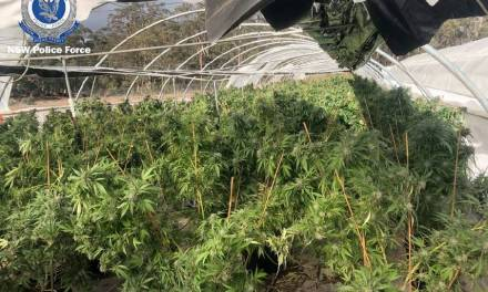 Australia: Goulburn Community reports of 'unusual odours' lead to cannabis arrests