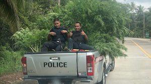 Thai Police Raid Marijuana Farm on Koh Phangan