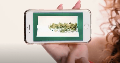 This is Weed Song – Tik Tok Version