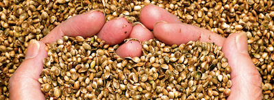 New Purdue University Course Provides Overview of Hemp Crop