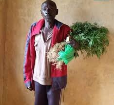 Kenyan man says he has been growing cannabis 'as a vegetable' for almost five decades
