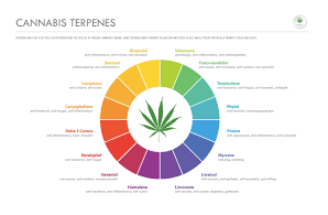 ABSTRAX Officially Becomes the First Terpene Distributor on Weedmaps' WM Exchange, the Wholesale Cannabis Platform from WM Business