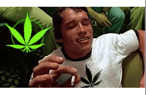 Using weed among young and middle-aged adults may be associated with exercise and sport, not couch-surfing