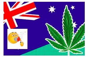 All The Latest Aussie Weedbusts Behind Murdoch Paywall