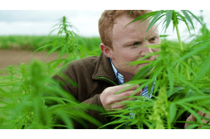 UK: Somerset Farmer Says Hurry Up & Scrap Archaic Cannabis Laws