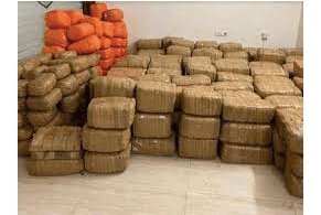 DRI's Indore unit records largest-ever cannabis seizure of 3,092 kg, three arrested