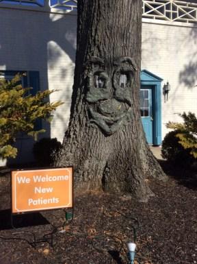 Dawn Morehead DDS, PA Office Tree