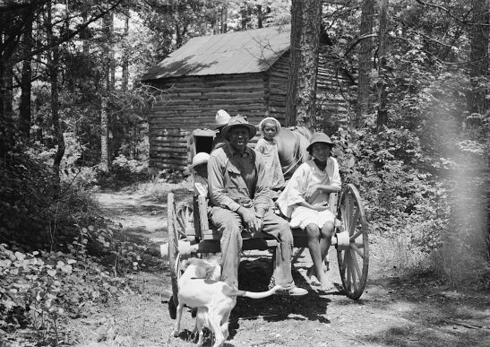 sharecropper family on wagon near Shoofly