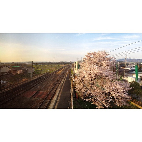 駅の桜   #sakura #iphonography #instagram #iphone4s