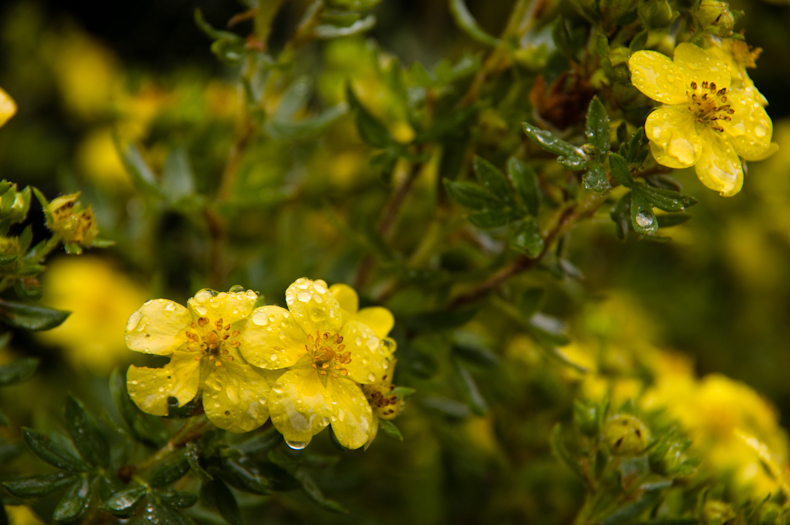 groene plant met gele bloemen