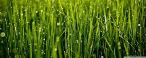 Grass will grow