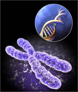 Telomere 255x300 8 Ways to Maximize Telomere Length and Increase Life Expectancy