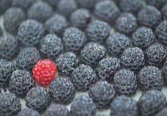 Eating Black Raspberries Significantly Lowers Cardiovascular Disease