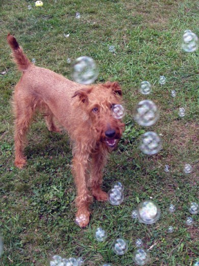 Rufus_Bubble