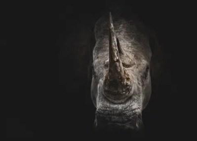 africa-safari-african-4