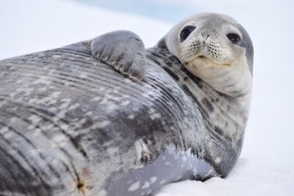antarctica-11