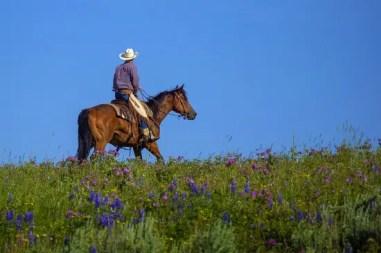 cowboy-3650313_1920