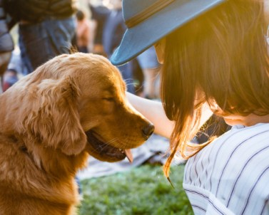 dog-pet-rescue-1