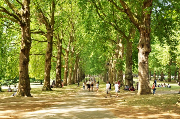green-park-2932220_1920