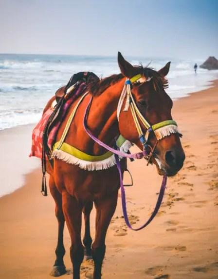 horse-beach-2