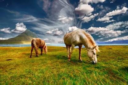 horses-2427513_1920