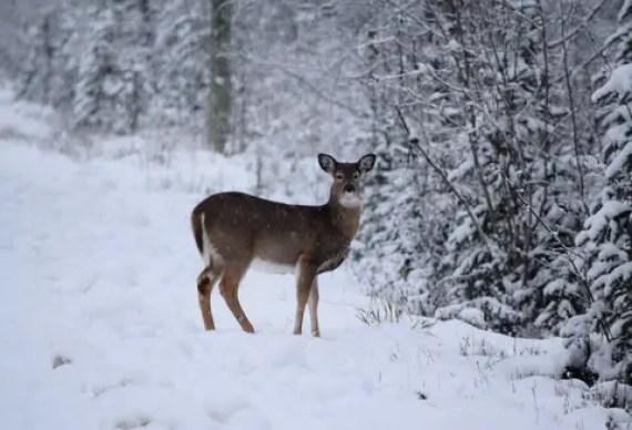 hunting-deer-3