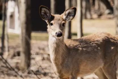 hunting-deer-5