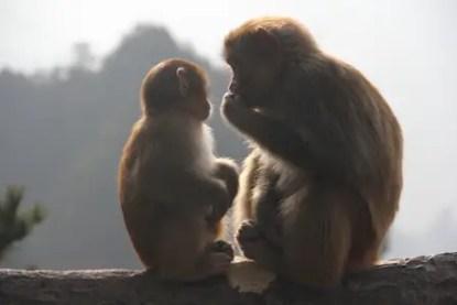 monkey-21916191
