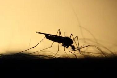 ways to prevent mosquito bites
