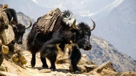 nepal-2938914