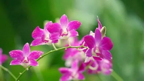 orchids-2137678