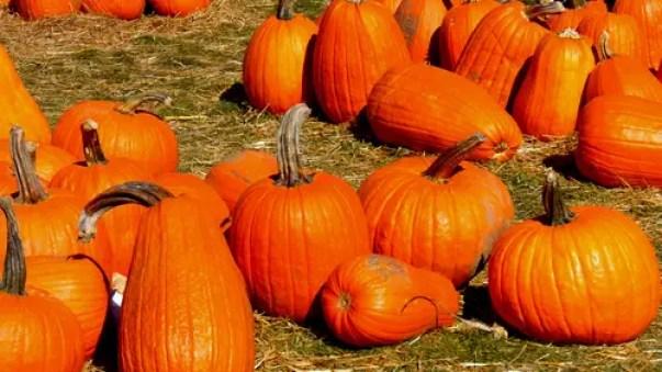 pumpkin-995413_1920
