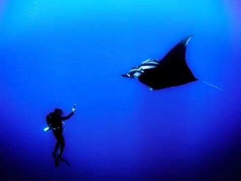 skorkeling-scuba-diving-1