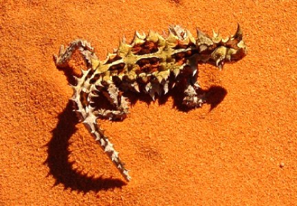 thorny-dragon-387217