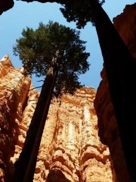 zion-national-park-1684922-001