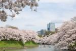 千鳥ケ淵の桜2016!時が止まったような大都会のオアシス!