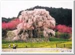 奈良の桜の名所2016おすすめ4選!歴史スポットで桜を愛でよう!