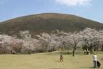 伊豆高原の桜2016は長い春!5月上旬までお花見ができる!