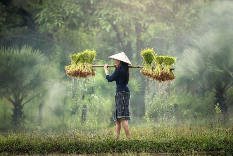 脱サラ 農業 転職