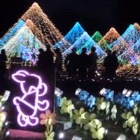 国営昭和記念公園のイルミネーション